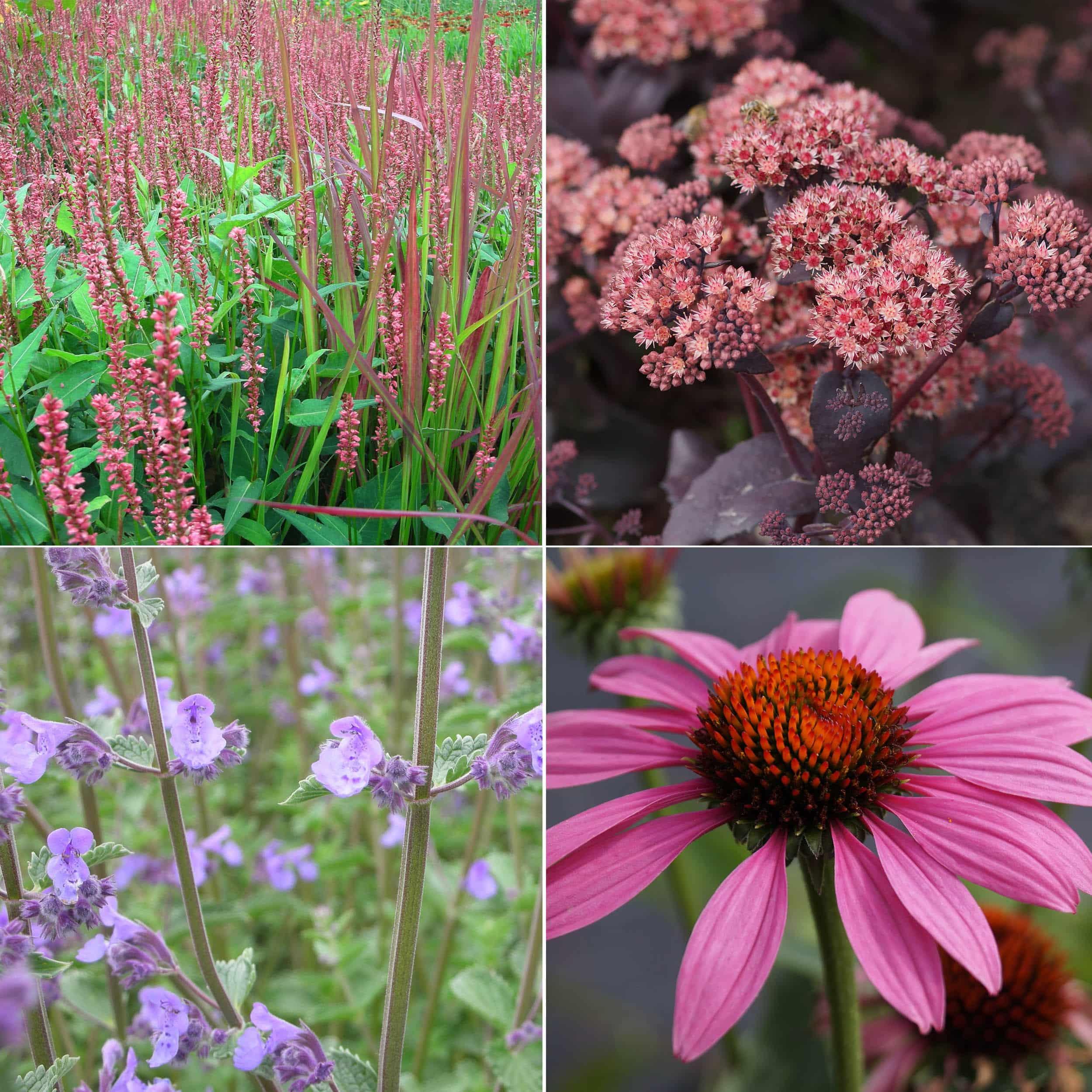 Staudenpaket für Bienen 12 Pflanzen