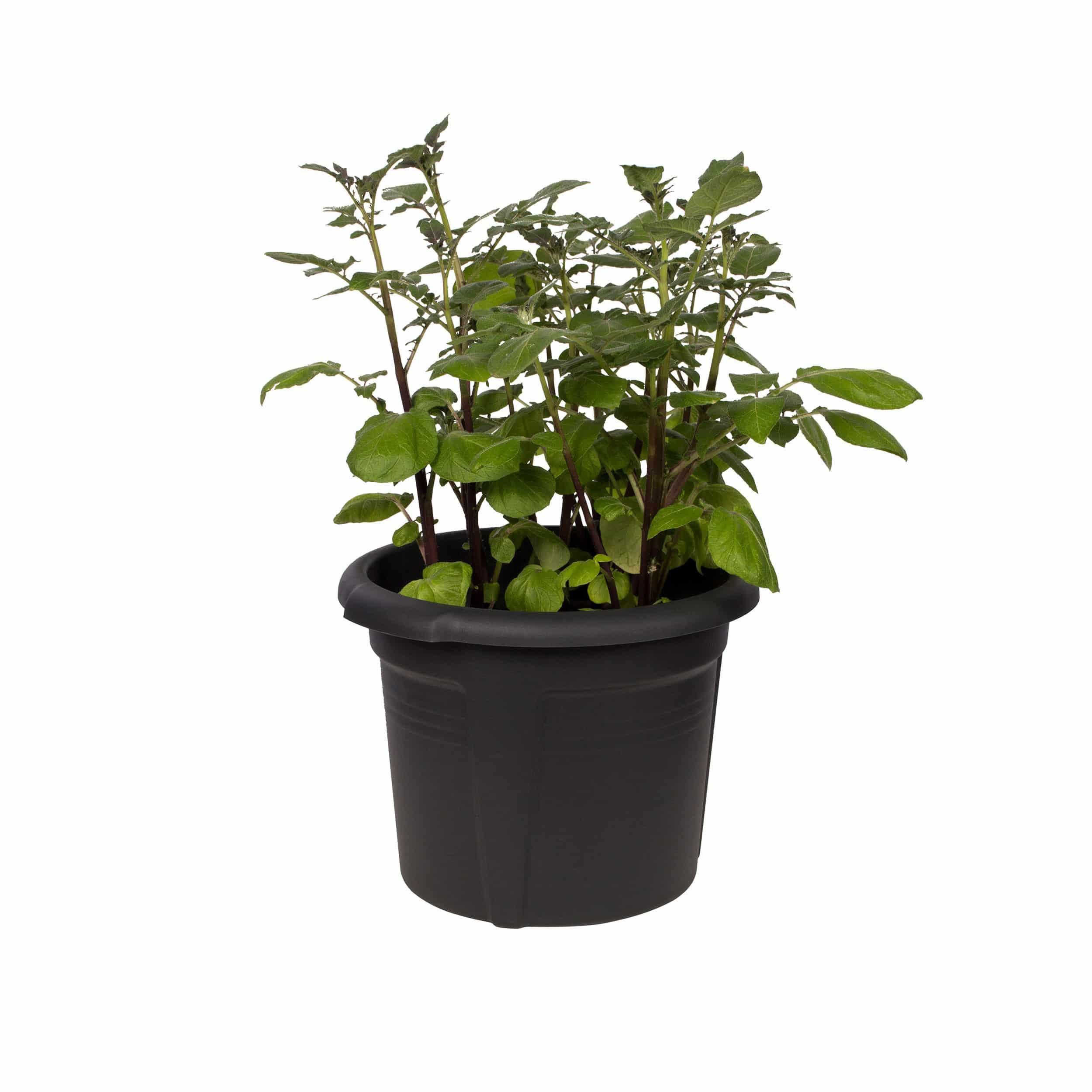 Green Basics Kartoffeltopf D33 cm