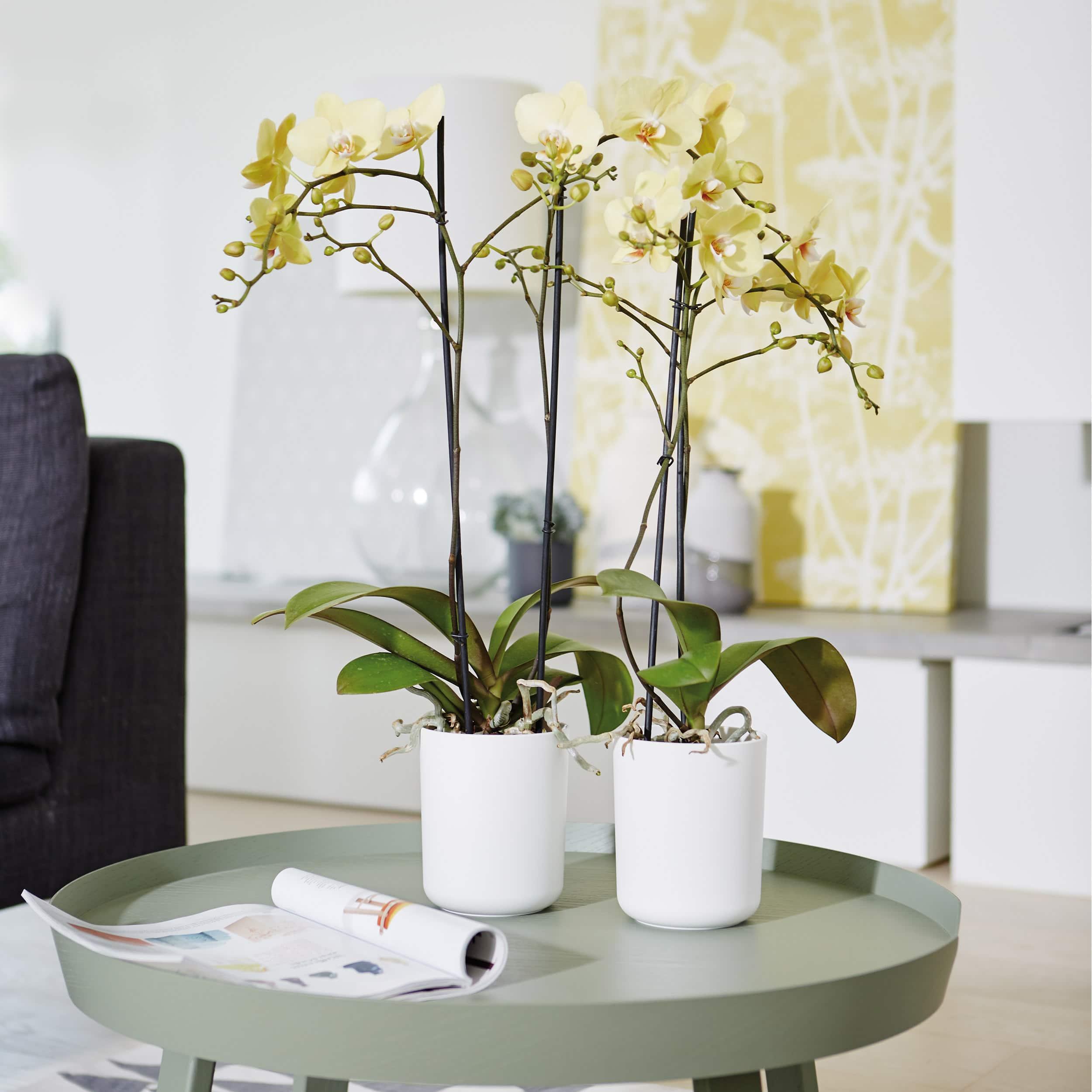 Orchideentopf b.for soft D12,5 cm weiß
