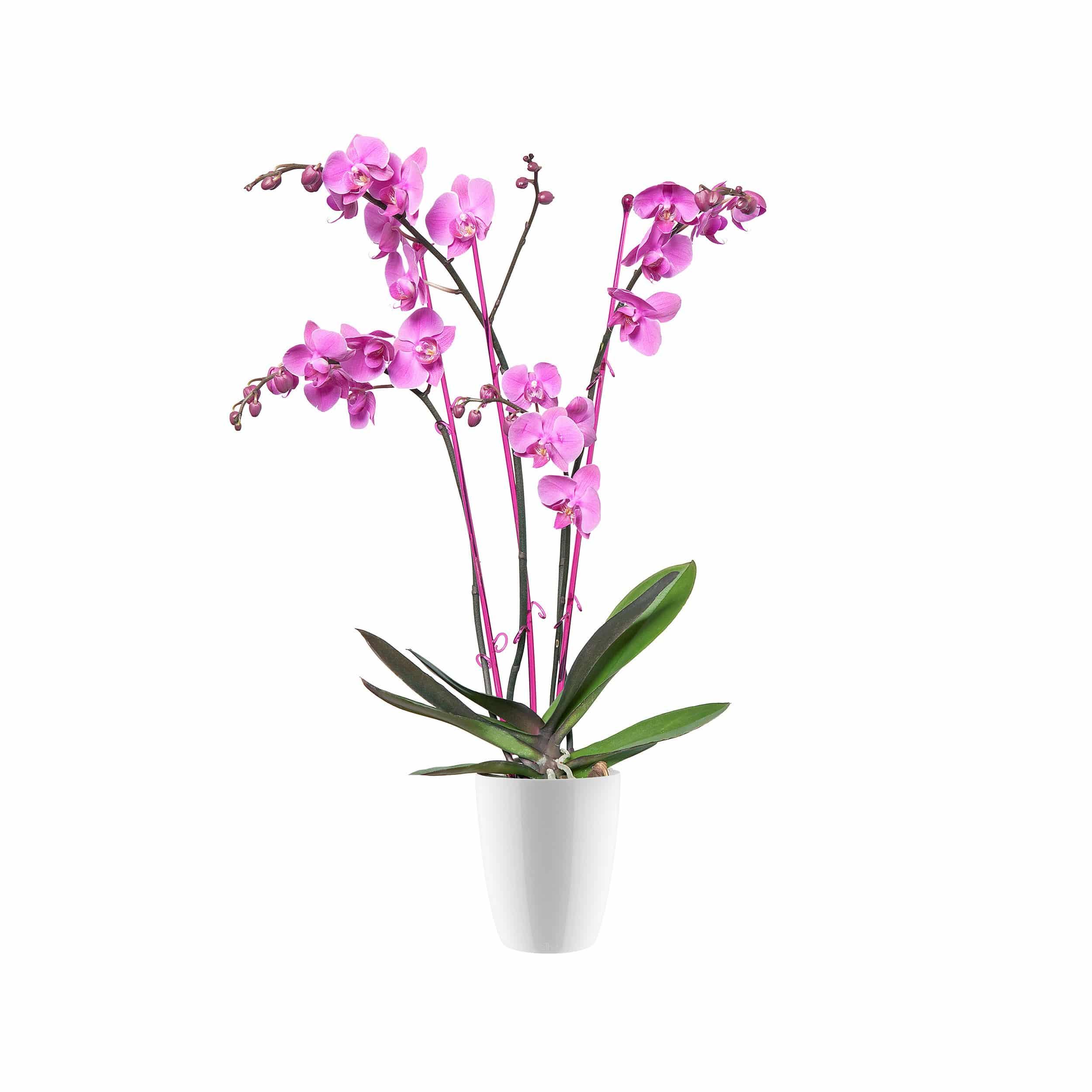 Orchideen-Übertopf Brussels Diamond Orchid High D13cm glänzend weiß