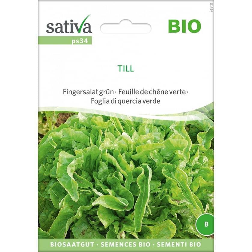 Saatgut Pflücksalat grün Till