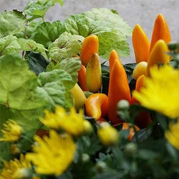 start-herbstblumen