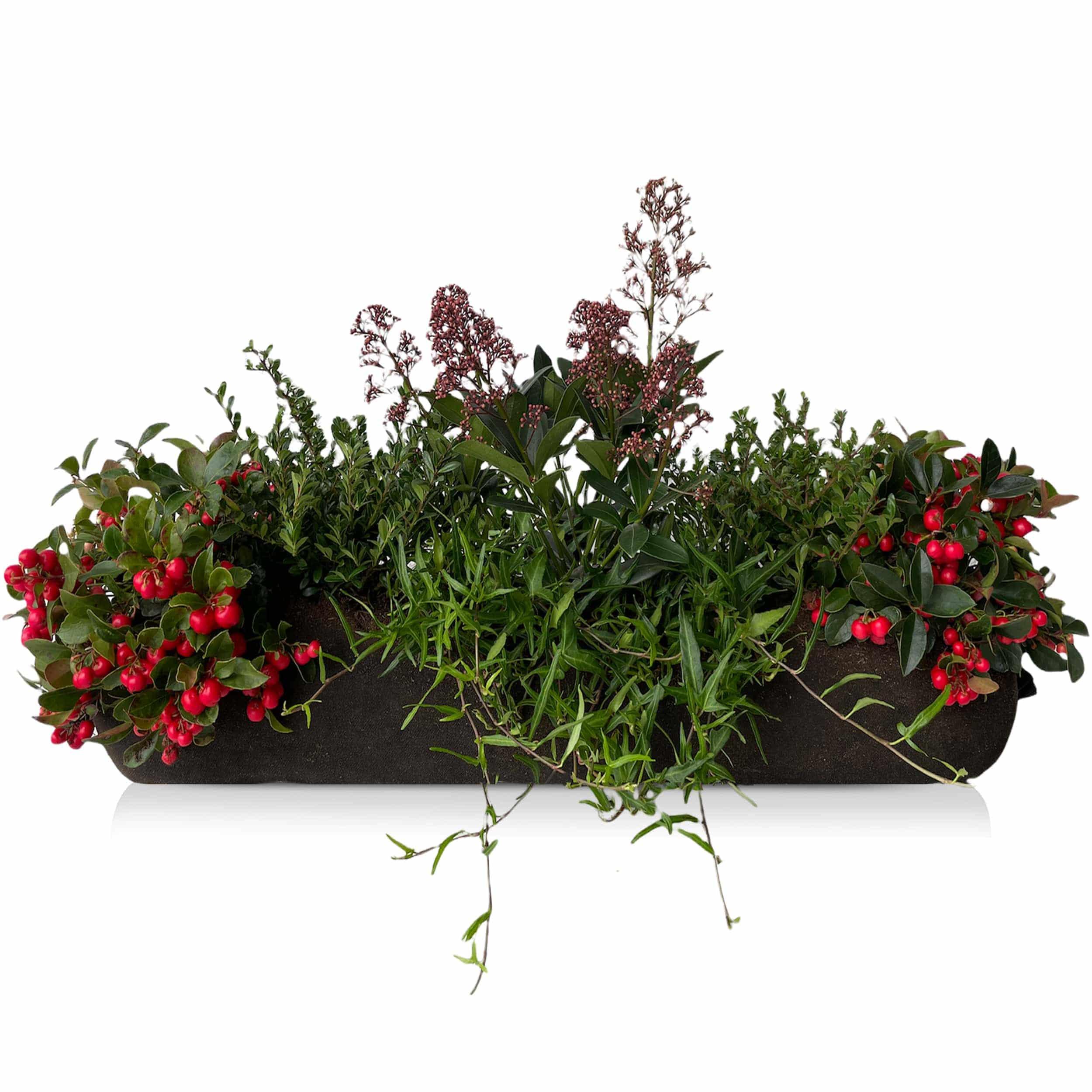 Winterblumen 'Beerenrot' Bag-Länge: 100 cm
