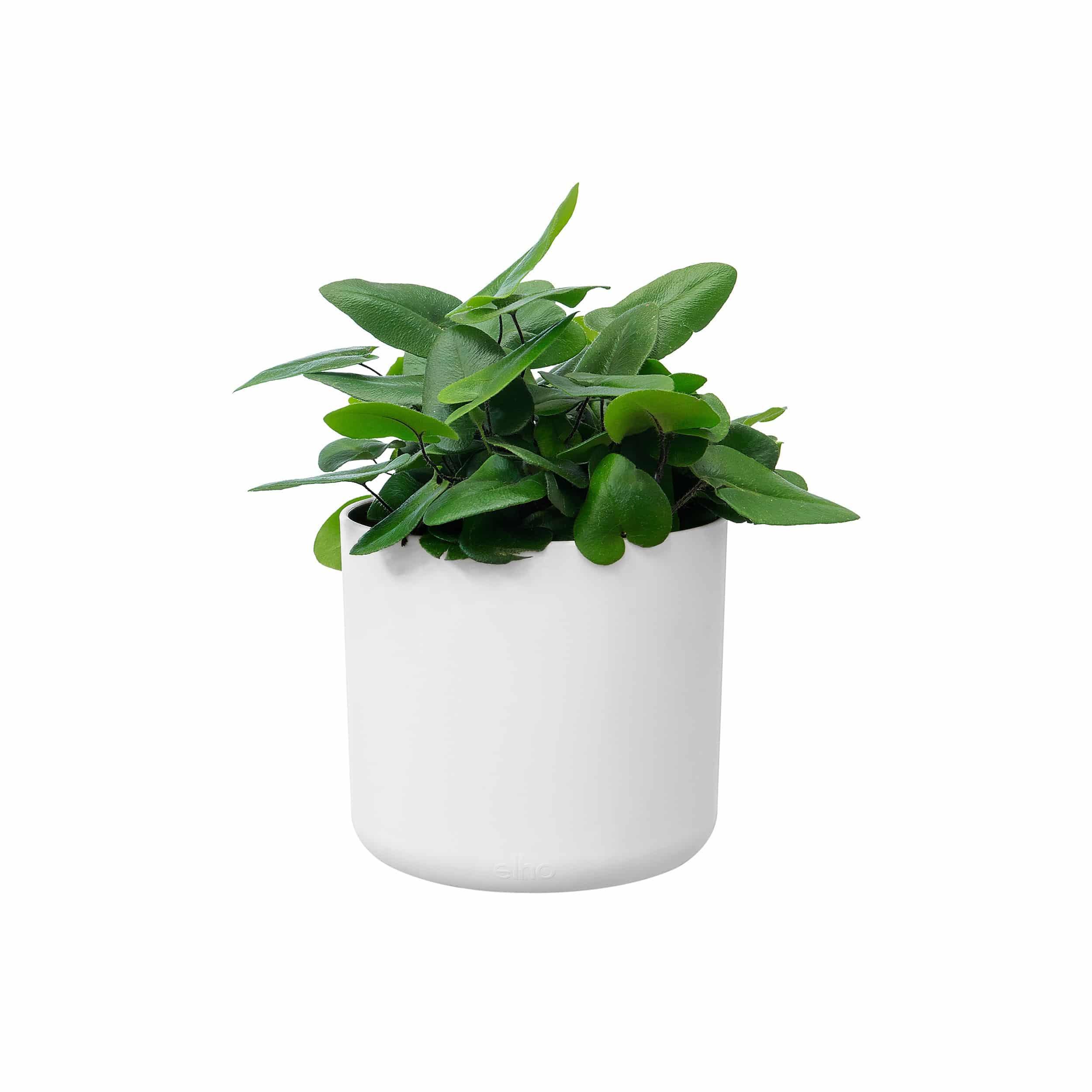 Blumentopf b. for soft rund D22 cm weiß