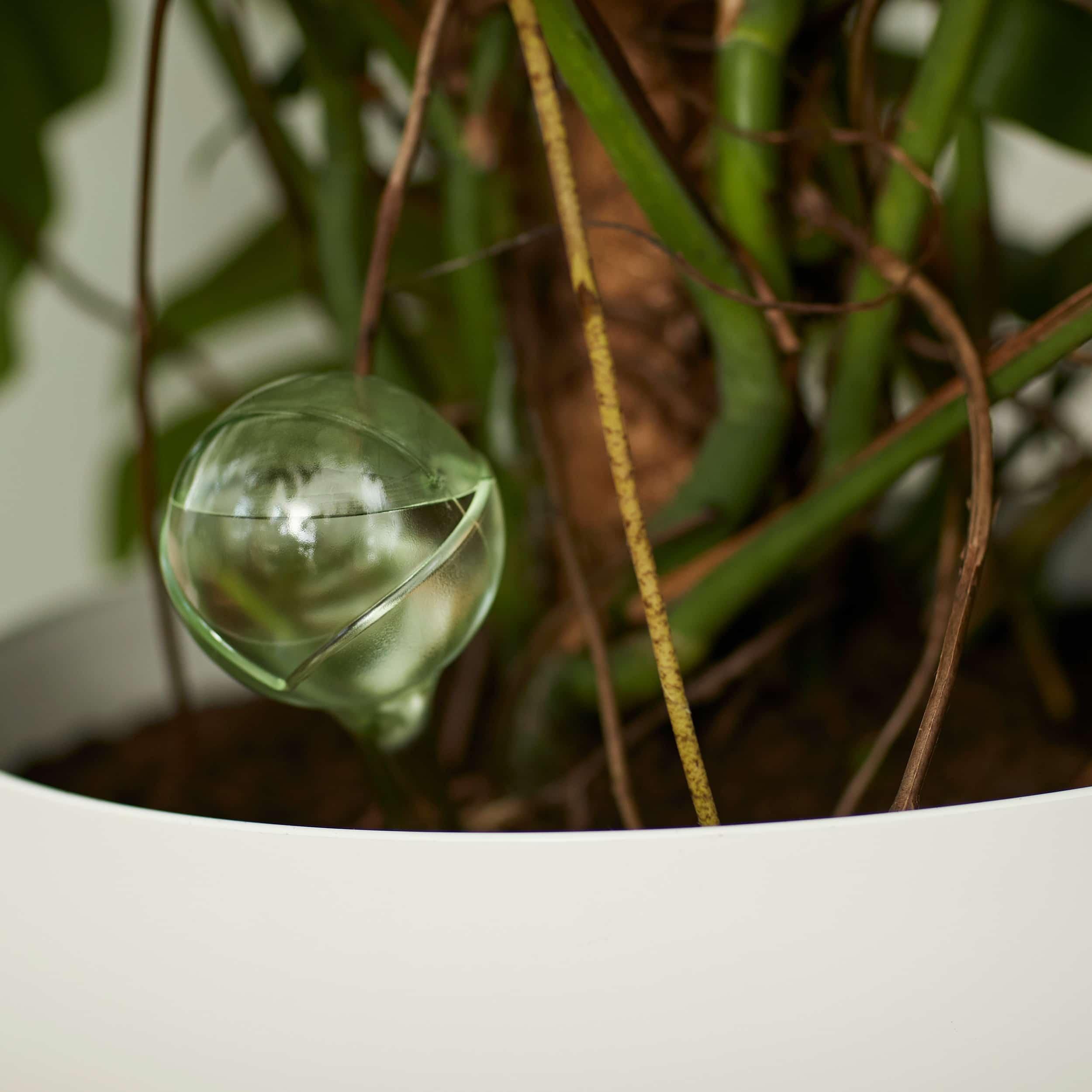Wasserspender Set Aqua Care limegrün