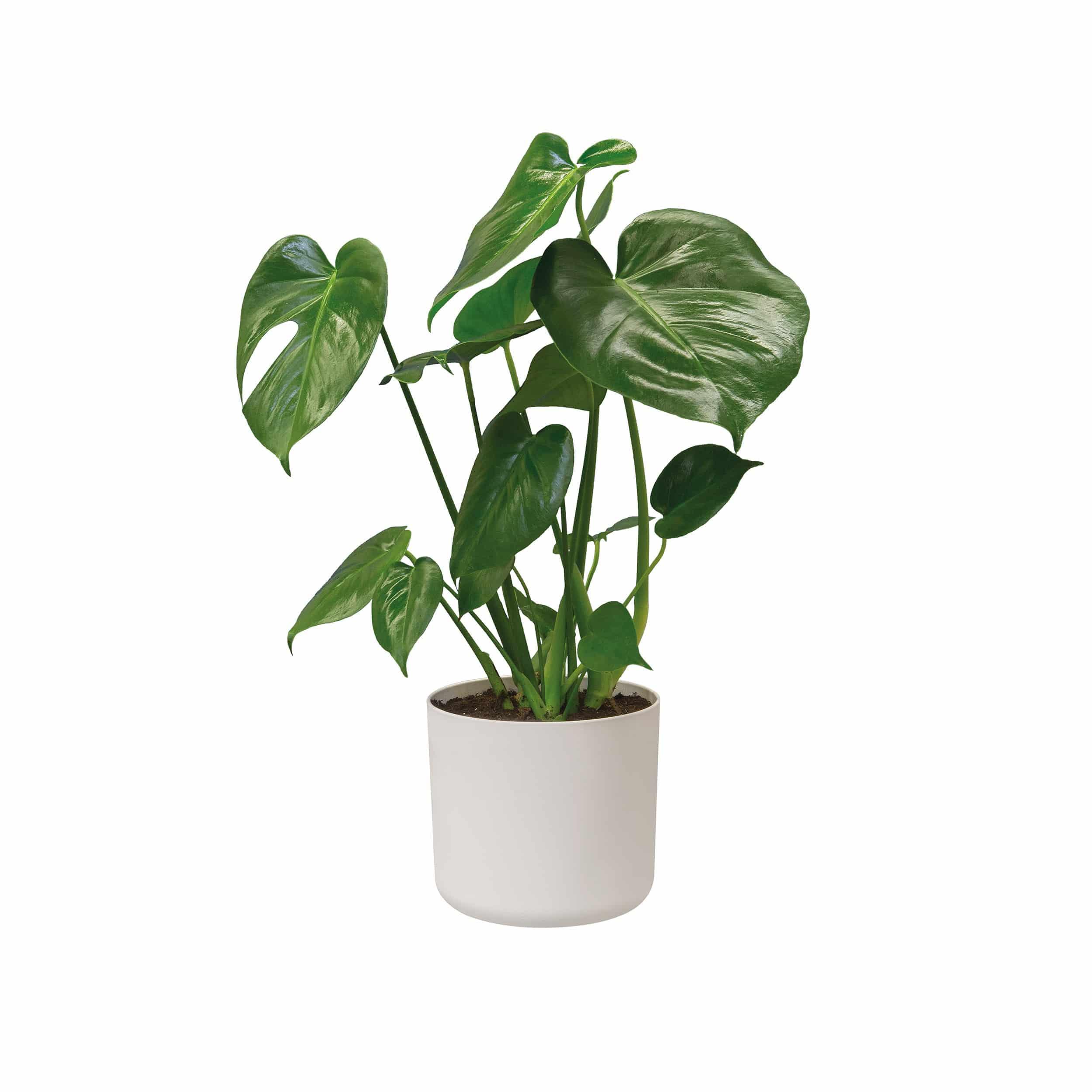 Blumentopf b. for soft rund D25 cm weiß
